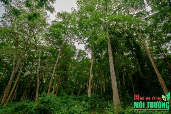 Chữa lành khí hậu và đa dạng sinh học bằng phục hồi rừng: Hiệu quả nhưng bị xem nhẹ