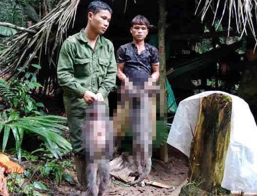 Giết hại 2 cá thể voọc quý hiếm, 5 thợ săn đối mặt mức phạt 2 tỉ đồng