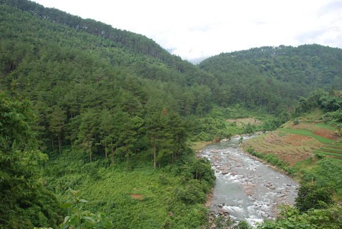 Quản lý hiệu ứng nhà kính: Cần chính sách cho nghề rừng!