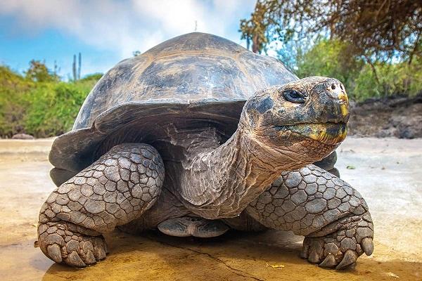 Quần đảo Galápagos hồi sinh từ bờ vực