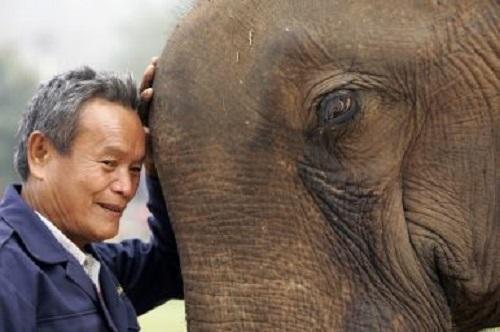 Liệu đất nước triệu voi có thể trụ được trước Vành đai và Con đường?