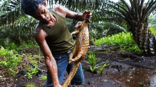 Ghi hình loài động vật có vú bị buôn bán nhiều nhất thế giới