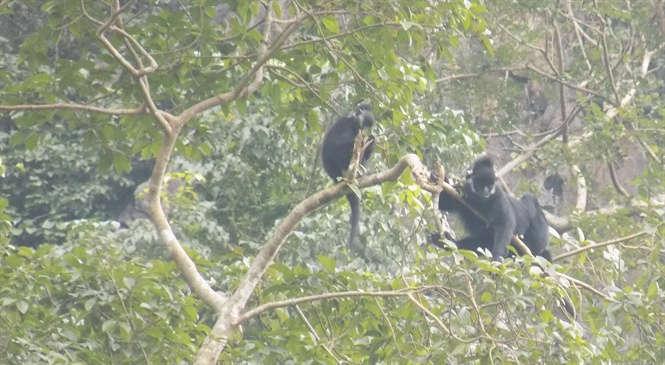 Đáng nể người hùng bảo vệ đàn voọc quý hiếm ở rừng Hung Sú