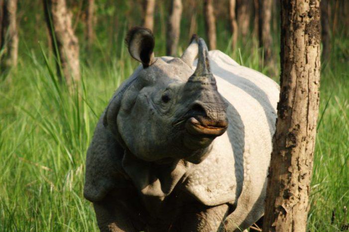 Tòa án Nepal bác dự án cao tốc xuyên vườn quốc gia nhằm bảo vệ tê giác
