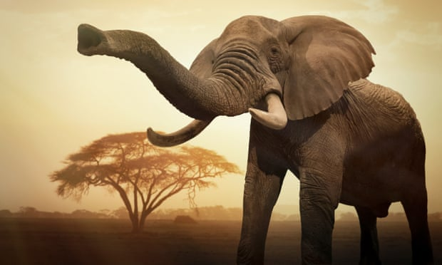 Việc giết chết các loài lớn đang đẩy chúng đến sự tuyệt chủng