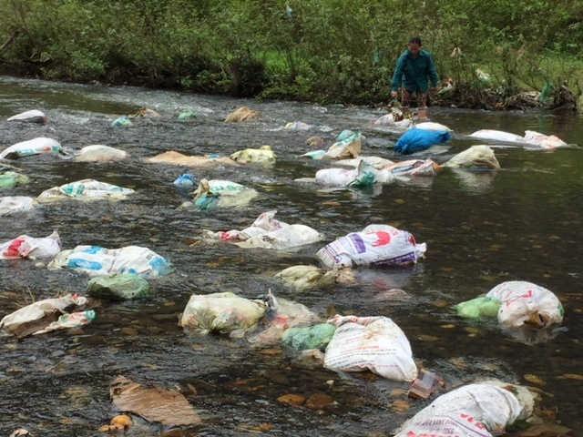 Kinh hoàng dòng sông chở đầy xác lợn chết!