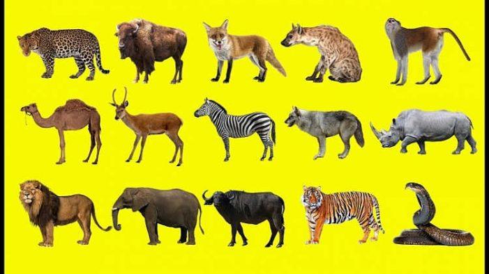 Kiểm soát buôn bán, tiêu thụ động vật hoang dã trong ngành Tài chính