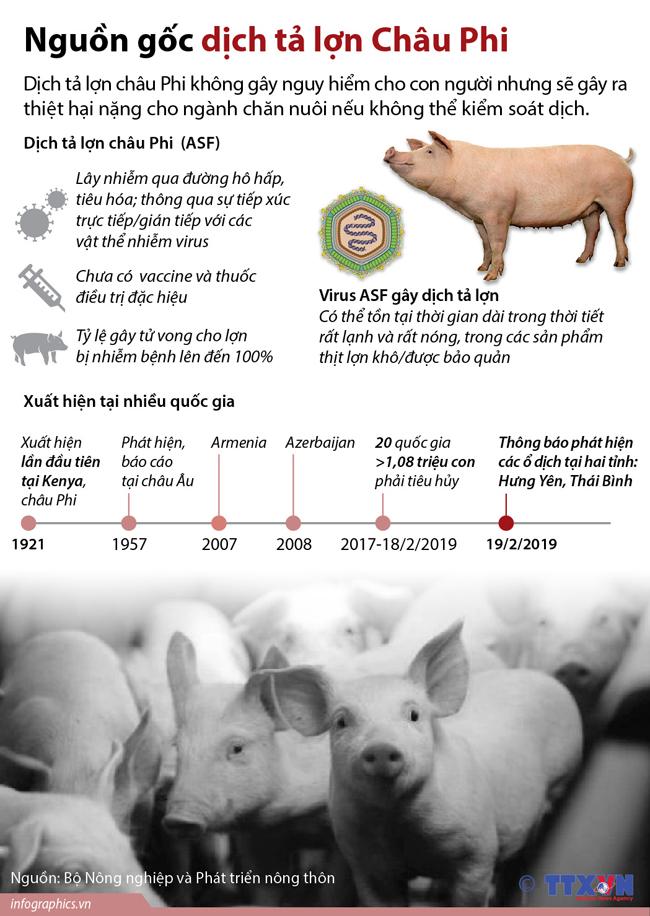 Nguồn gốc dịch tả lợn Châu Phi