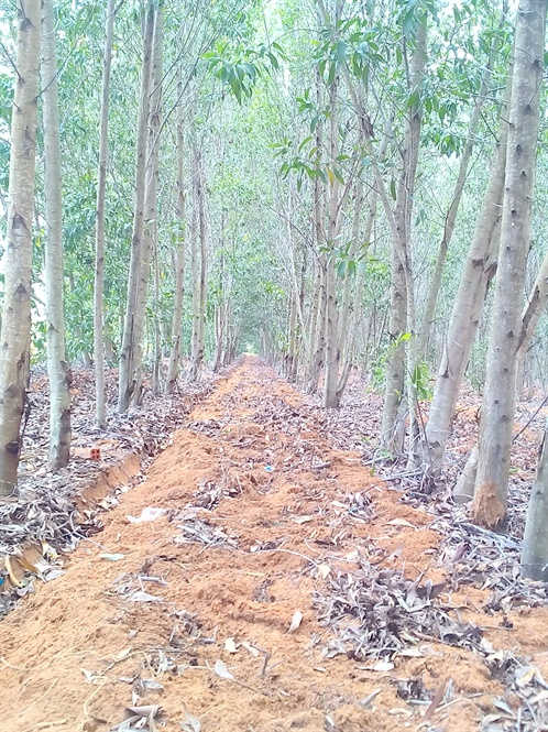 Bình Thuận ngăn chặn cháy rừng