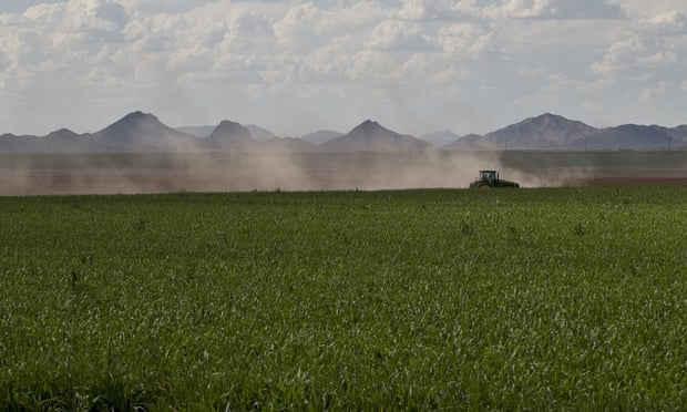 Nguồn cung thực phẩm toàn cầu bị đe dọa vì suy giảm đa dạng sinh học