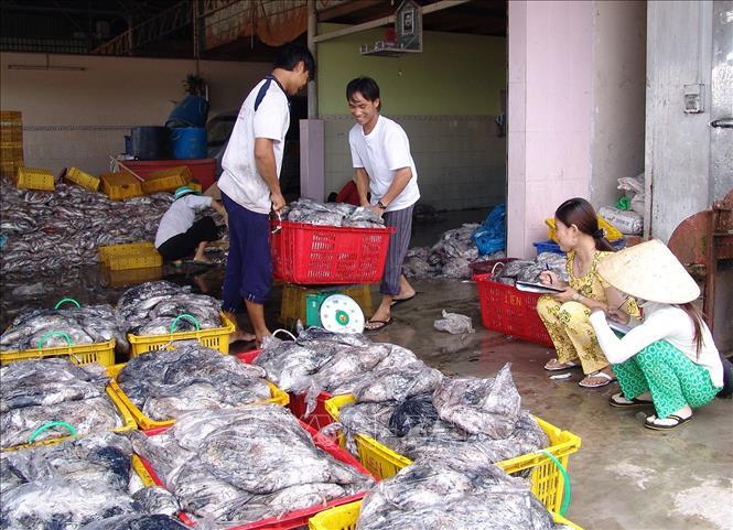 Điều tra thăm dò nguồn lợi hải sản vùng biển sâu Việt Nam