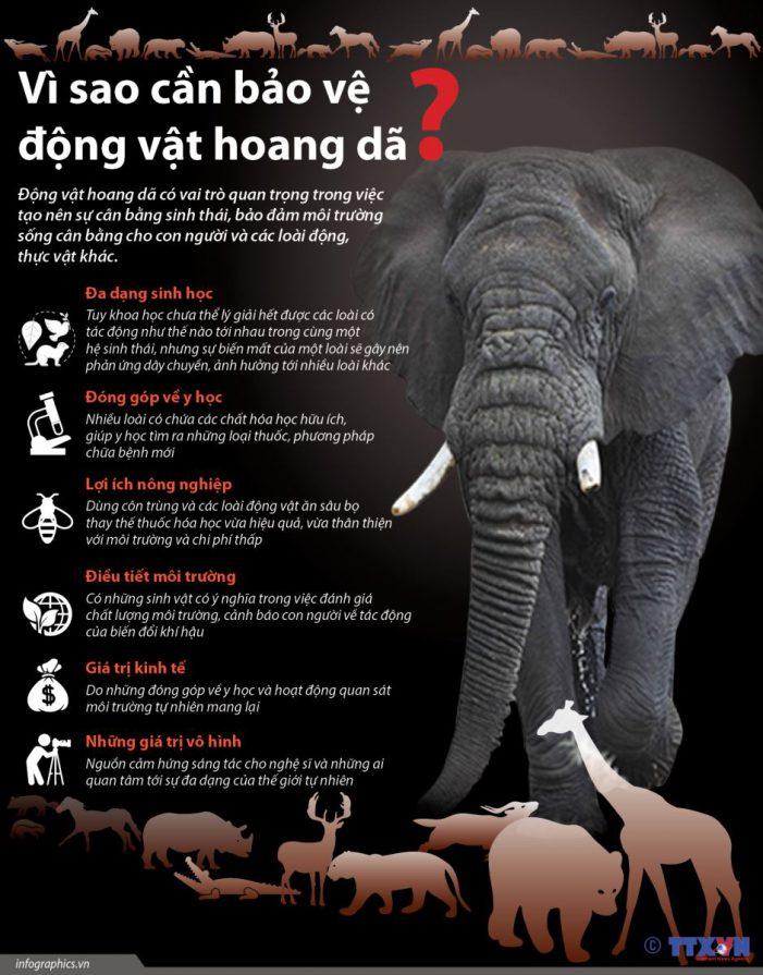 Giá trị khổng lồ của động vật hoang dã
