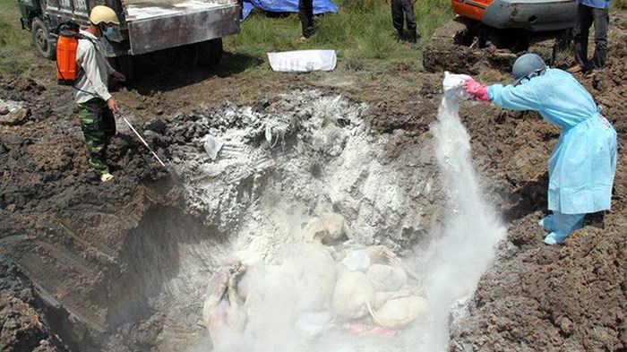 Dịch tả lợn châu Phi đã lây lan ra 9 tỉnh, thành phố