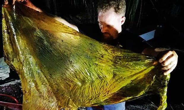 Cá voi con chết thảm vì nuốt 40 kg rác thải nhựa