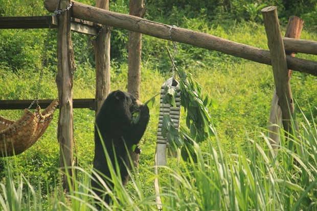 """""""Hãy cho gấu cuộc sống tốt đẹp hơn tại các trung tâm bảo tồn"""""""