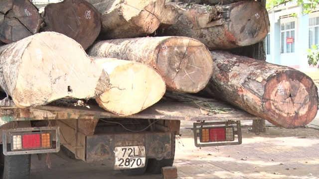 Mật phục bắt ô tô chở gỗ lậu từ lòng hồ thủy điện Ya Ly