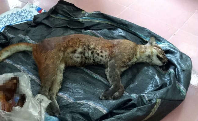 Nghệ An: Bắt vụ vận chuyển động vật hoang dã quý hiếm