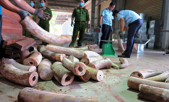 Phó Thủ tướng chỉ đạo mở rộng tìm ra đường dây buôn lậu vận chuyển trái phép hơn 9 tấn ngà voi vào Việt Nam