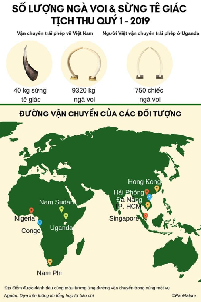 Hơn 9,3 tấn ngà voi bị tịch thu trong Quý I/2019