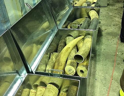 Công chức Hải quan Đà Nẵng bắt ngà voi, vảy tê tê được tặng Bằng khen Thủ tướng