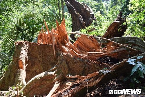 """Thêm một khu rừng phòng hộ ở Quảng Nam bị """"xẻ thịt"""""""
