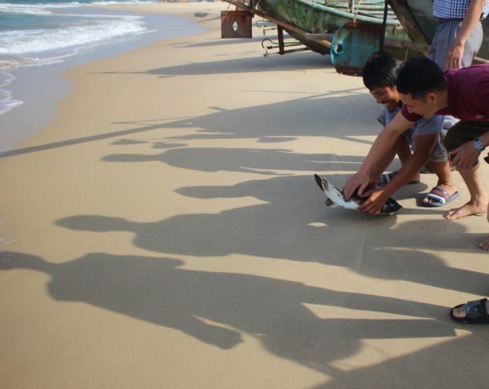 Chủ quán hải sản thả đồi mồi quý hiếm nặng 5 kg về đại dương