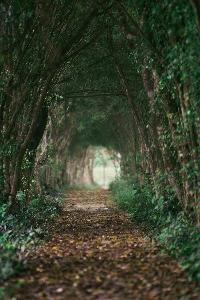 Những khu rừng trống rỗng