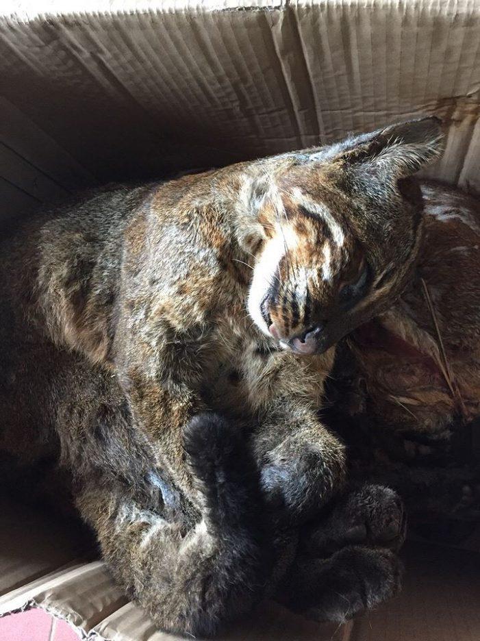 Bước tiến trong ngăn chặn nạn buôn bán động vật hoang dã