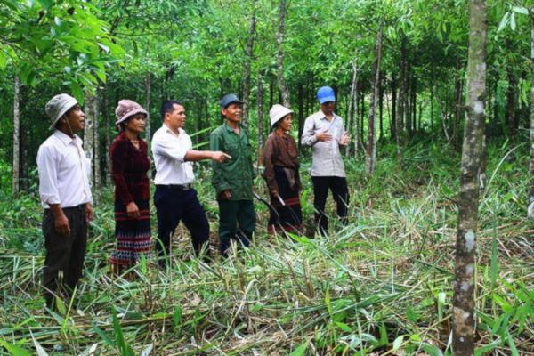 Quảng Trị đặt mục tiêu có 100.000 ha rừng gỗ lớn