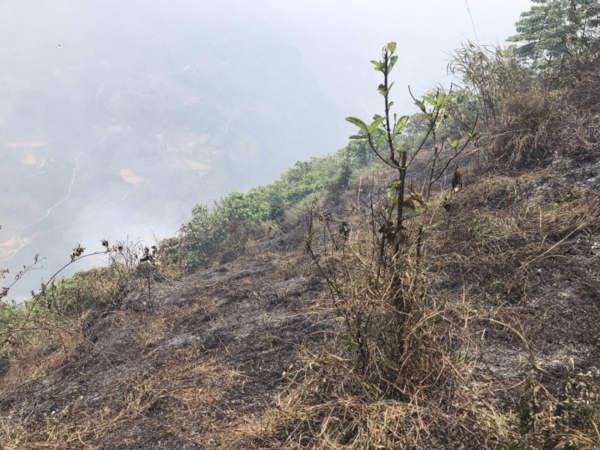 Lào Cai có văn bản hỏa tốc về phòng, chống cháy rừng
