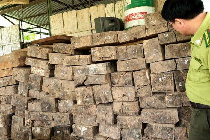 Khởi tố, bắt giữ các đối tượng phá rừng tại Phong Nha – Kẻ Bàng