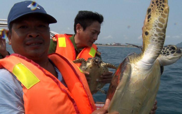 Ân nhân của nhiều cá thể rùa biển