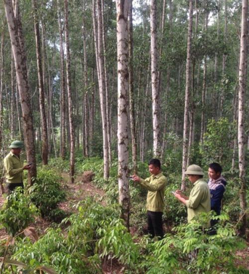 Nghệ An đặt mục tiêu 170.000 ha rừng gỗ lớn