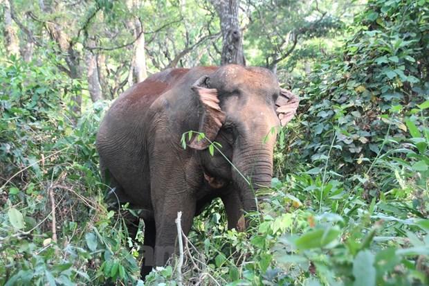 """""""Cuộc chiến chống buôn bán ngà voi"""": Không mạnh tay, voi còn đổ máu…"""