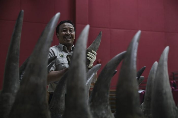 Vì sao hàng loạt chiến dịch giảm cầu sừng tê ở Việt Nam thất bại?