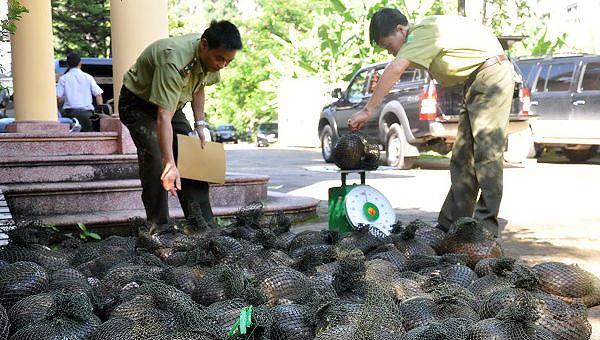 Thừa Thiên – Huế, TP HCM dẫn đầu xử lý vi phạm về tiêu thụ động vật hoang dã