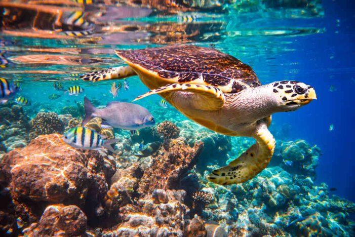 Một triệu loài bị đe dọa tuyệt chủng
