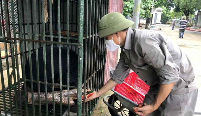 Bảo vệ động vật hoang dã: Báo động tình trạng vi phạm pháp luật