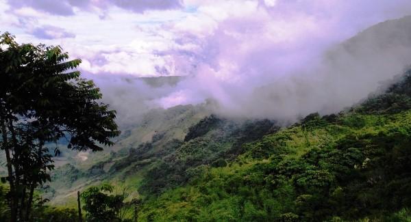 Quảng Nam: Phê duyệt Dự án Dự trữ carbon và bảo tồn đa dạng sinh học giai đoạn 2