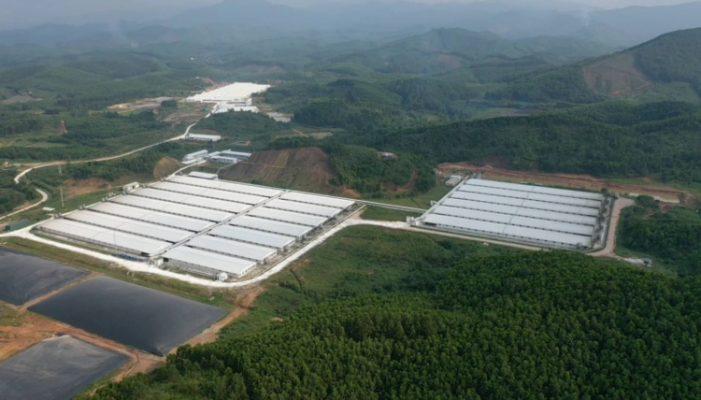 Bắc Giang: Đình chỉ 3 tháng Công ty Chăn nuôi Hoà Phát Bắc Giang gây ô nhiễm