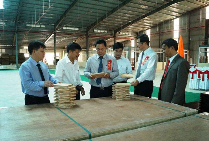 Quảng Nam: Xây dựng mô hình liên kết trồng rừng gỗ lớn theo tiêu chuẩn quốc tế FSC