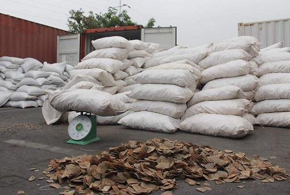 Bắt lượng vảy tê tê lớn nhất từ trước đến nay tại cảng Hải Phòng