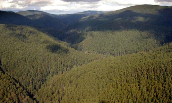 Biến đổi khí hậu đe dọa 26 loài bản địa ở dãy Great Dividing Range