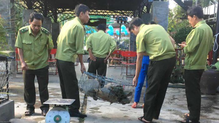Quảng Nam: Xử phạt hành chính chủ quán cà phê nuôi nhốt 7 con rùa thuộc nhóm quý hiếm