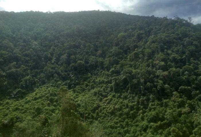 Đà Nẵng tập trung quản lý chặt chẽ việc bảo vệ và phát triển rừng