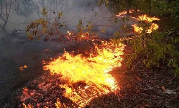 Quảng Bình: Cháy lớn ở rừng phòng hộ ven biển