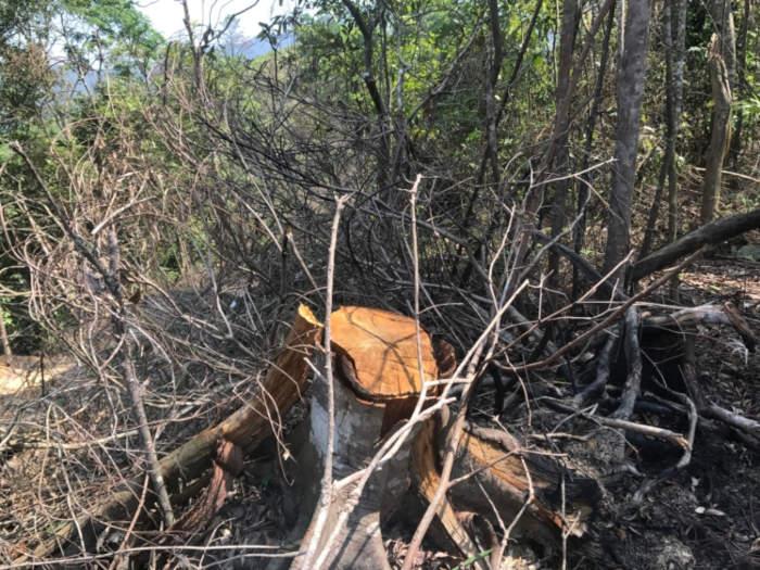 Quảng Ninh: Trồng rừng thay thế hay tàn phá rừng phòng hộ?