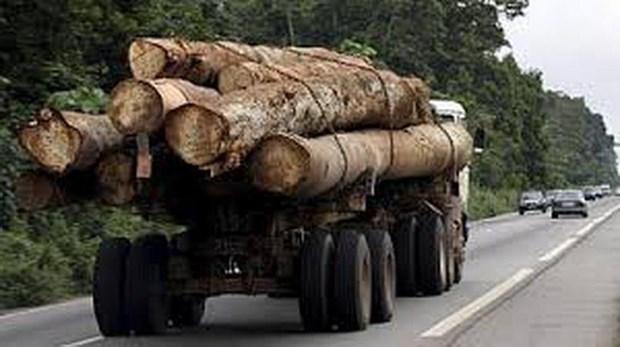 """Gabon: Phó tổng thống bị sa thải sau bê bối gỗ quý """"mất tích"""""""