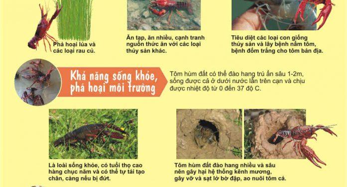 Tác hại của tôm hùm đất đối với môi trường