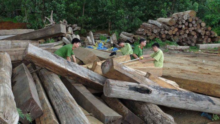 Hồi kết cho gỗ bất hợp pháp